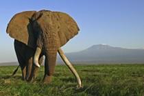 ஆபிரிக்காவில் வருடத்துக்கு 30 ஆயிரம் யானைகள் கொல்லப்படுகின்றன; அதிர்ச்சித் தகவல்