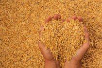 நெல், அரிசி உள்ளிட்ட பொருள்களை களஞ்சியப்படுத்தி வைத்திருப்போர், 07 நாட்களுக்குள் அறிவிக்க வேண்டும்: அரசு உத்தரவு
